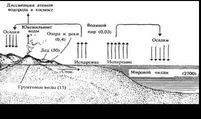 Биология Среда обитания живых организмов Реферат Учил Нет  Вода покрывает 71% площади земного шара и составляет1 800 часть объема суши или 1370 м3 Основная масса воды сосредоточена в морях и океанах 94 98%