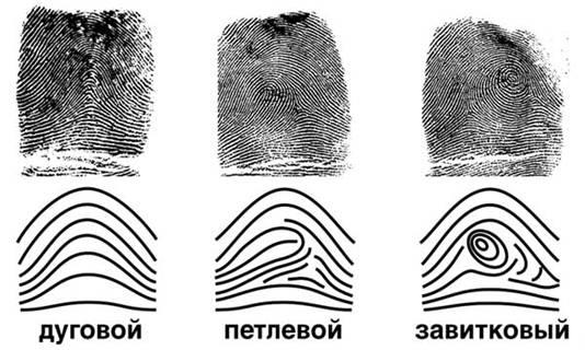 Государство и право Криминалистическое значение следов пальцев  Еще из раздела Государство и право Реферат