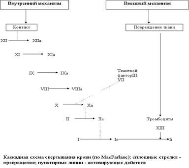 Факторы свертывания крови реферат 5026