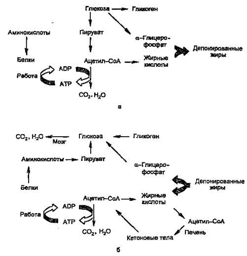 Биохимия причины сахарного диабета