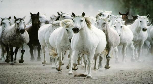 Физкультура и спорт Казахские национальные виды спорта и  Особенно большой популярностью пользовались конно спортивные игры Конь составлял подвижную основу кочевого хозяйства и являлся олицетворением красоты