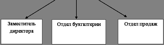 Бухгалтерский учет и аудит Характеристика деятельности и  Директор
