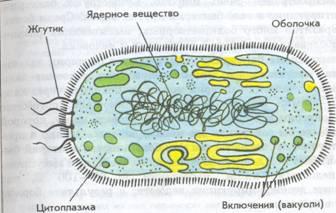 картинки клетки бактерий