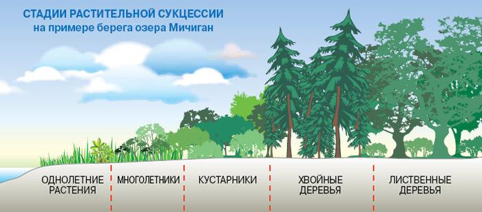 На стадии климакса биомасса экосистемы