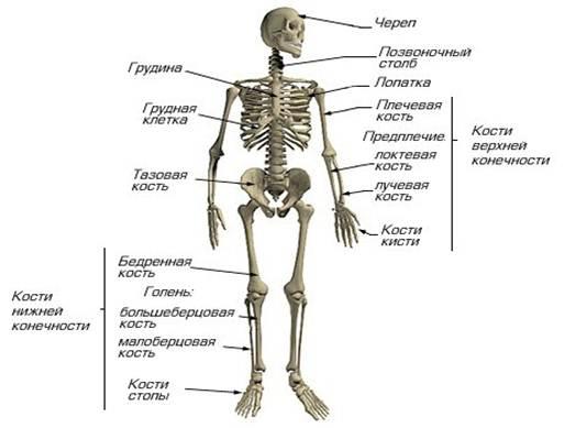 пукция тазобедренного сустава