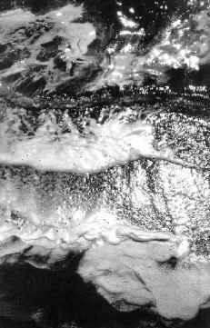 География Анаэробные бактерии в жизни экосистемы Черного моря  Если спросить у биолога геолога или географа что он знает о глубинах Черного моря то ответ будет однозначным Черное море огромный резервуар